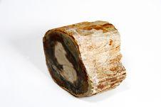 Free Petrified Wood Stock Images - 3690594