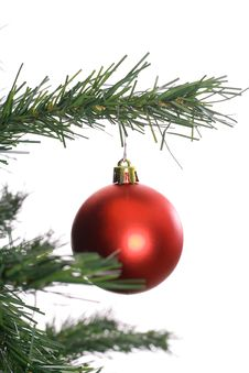 Red Ornament Hanging On Tree Branch White Backgrou Stock Photos