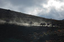 Free Horses Of A Trekker Group Stock Photography - 3693572