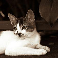 Free Kitten Stock Images - 3693844