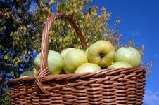 Free Basket Of Green Apples Royalty Free Stock Photo - 3694645