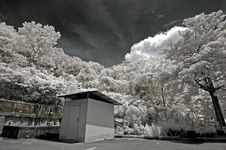 Free Infrared Photo – Tree, Hut And Cloud In The Park Royalty Free Stock Images - 3695029