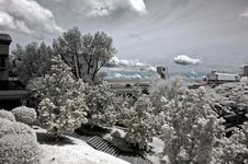 Free Infrared Photo – Tree, Skies And Building Stock Image - 3695031