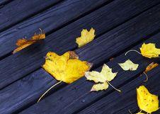 Wet Autumn Royalty Free Stock Photo