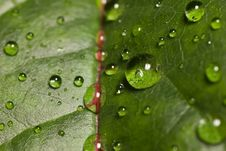 Free Leaf With Drops Royalty Free Stock Image - 3695486