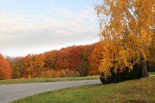 Free Autumn Avenue Stock Photography - 3695642
