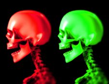 Free Two Skull 5 Royalty Free Stock Images - 3696979