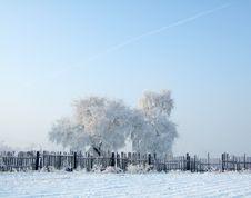 Free Rimed Trees Stock Image - 3697111
