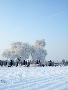 Free Rimed Trees Stock Image - 3697831