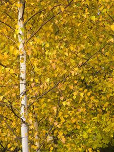 Free Autumn 1 Stock Images - 3697874
