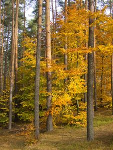 Free Autumn 3 Stock Photography - 3698022