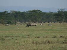 Free Safari Royalty Free Stock Photo - 3699495