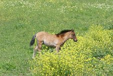 Free Young Horse Or Foal In A Field In Spain Stock Photo - 370880