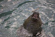 Free Seal Stock Photo - 373950