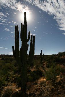 Free Saguaro Silhouette Stock Photos - 375223