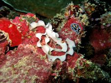 Free Nudibranch Eggs Stock Images - 375264