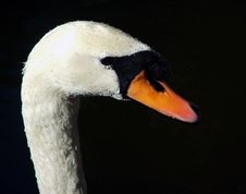 Free Profile Of A Swan Stock Images - 376764