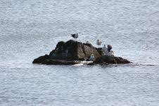 Seagulls On Rock Royalty Free Stock Photo