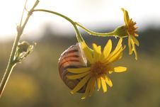 Free Snail On The Yellow Flower Stock Images - 377984