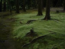 Free Miyazaki S Forest Royalty Free Stock Photos - 379368