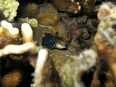 Free Mandarin Fish Royalty Free Stock Photo - 379545