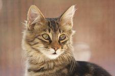 Free Cat Stock Photos - 379883