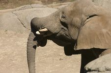 Free Elephants Stock Photos - 3700623