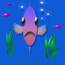 Free Fish Face Royalty Free Stock Image - 3703506