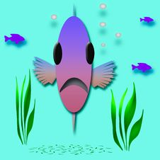 Free Fish Face Royalty Free Stock Photography - 3703507