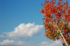 Free Reaching The Sky Stock Image - 3703611