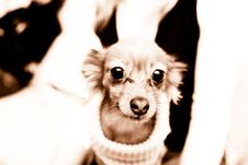 Free Small Dog 2 Stock Photos - 3703813