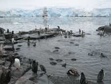 Free Penguin Pool At Port Lockroy Stock Image - 3703841