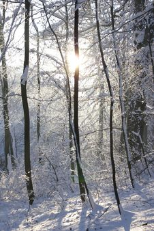 Free Snow-covered Forest Stock Photos - 3704633