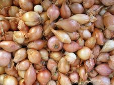 Free Fresh Organic Onions Royalty Free Stock Photo - 3704815
