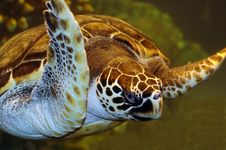 Free Turtle. Stock Images - 3704994