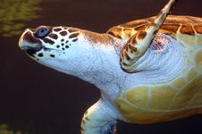 Free Turtle. Stock Photos - 3705063