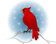 Free Red Cardinal Sitting On Branch In Winter Royalty Free Stock Photos - 3706458