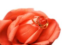 Free Wedding Rings On The Rose On White Royalty Free Stock Photo - 3706985