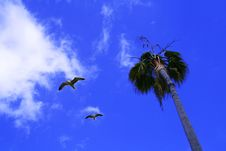 Free Looking Up To The Sky Stock Images - 3707014