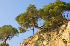 Free Pine-trees On Rocky Hill Royalty Free Stock Photo - 3708975