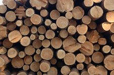 Free Stack Of Wood Royalty Free Stock Photo - 3709135