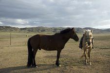 Free Horses In Gobi Stock Image - 3709211