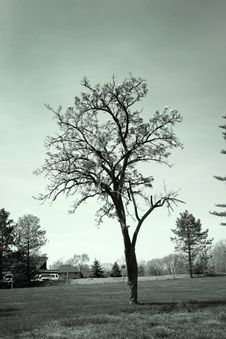 Tree In The Farm Stock Photography