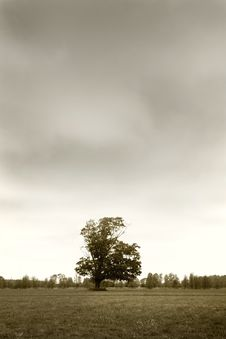 Free Single Tree In The Farm Stock Image - 3709351