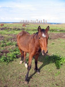 Free Wild Horse And Ahu Tongariki Stock Photography - 3710412