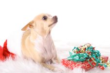 Free Can I Please Open My Present Royalty Free Stock Images - 3713159