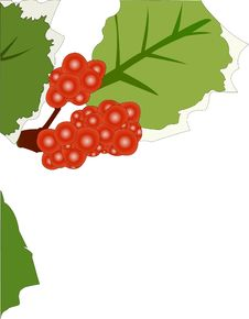 Free Holly Leaves With Red Berries Royalty Free Stock Photos - 3713338