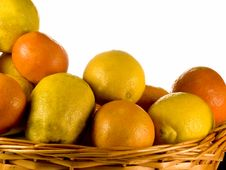 Free CITRUS Stock Photos - 3714453