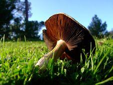 Free Mushroom Stock Photos - 3714673