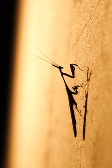 Free A Mantis Waiting For Prey Royalty Free Stock Images - 3716089